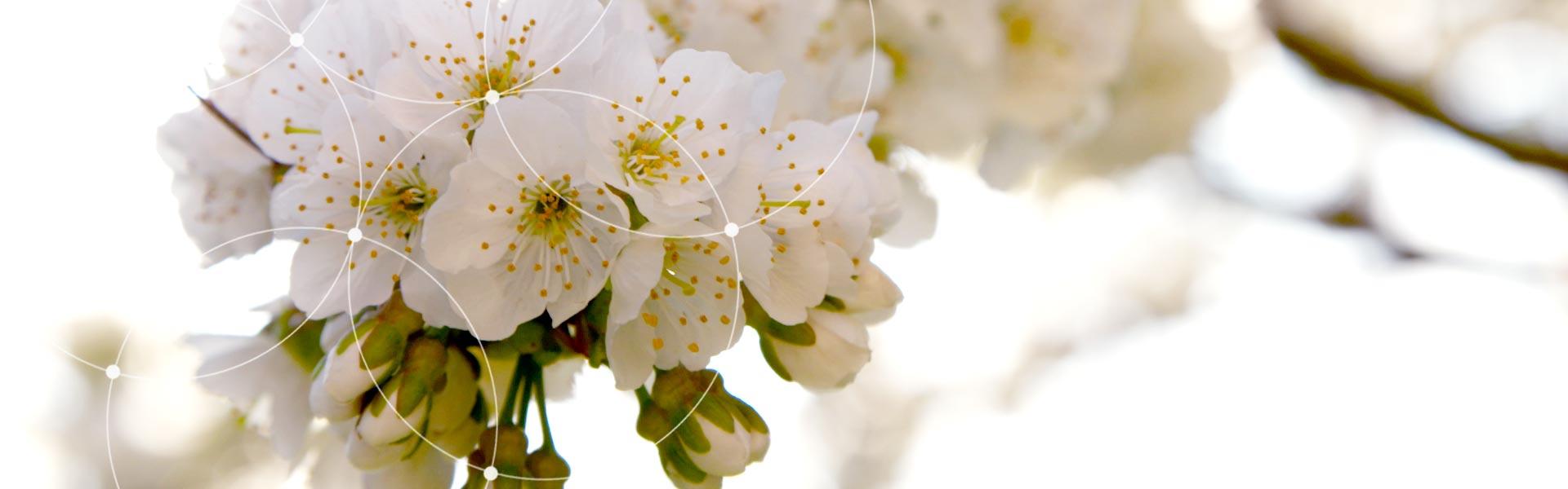Homepage_fleures